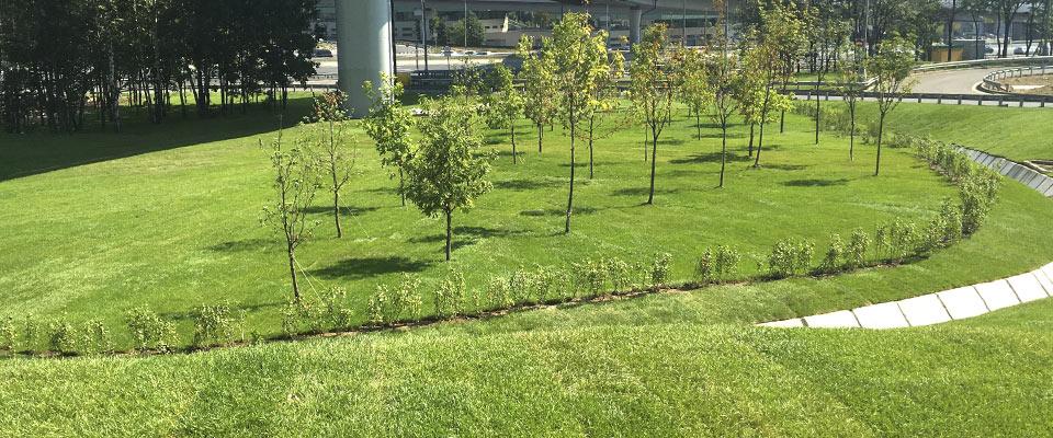 Рулон газона на траве