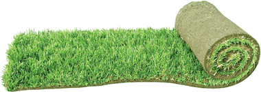 Рулон травяного газона